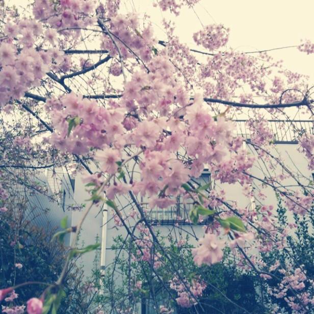 回忆,需要太多的勇气 - yaohanjiarenTENG - 瑶涵佳人的博客