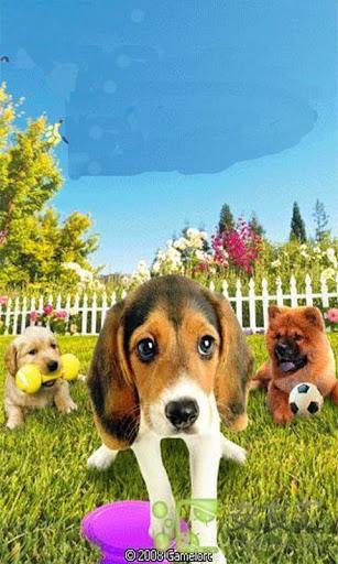 寵物主義 - 狗狗