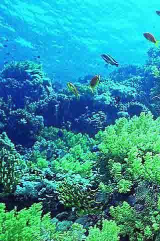 世界最美海底世界动态壁纸